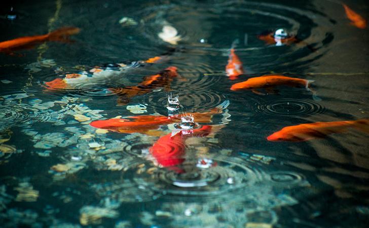 鱼塘理论:鱼塘的7次变革转型