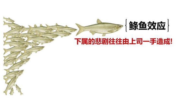 鲦鱼效应:身教比言教更具说服力