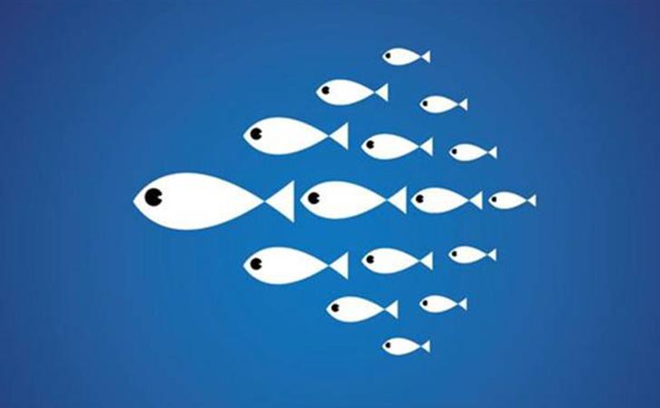 鱼思维:互联网就是小鱼吃大鱼