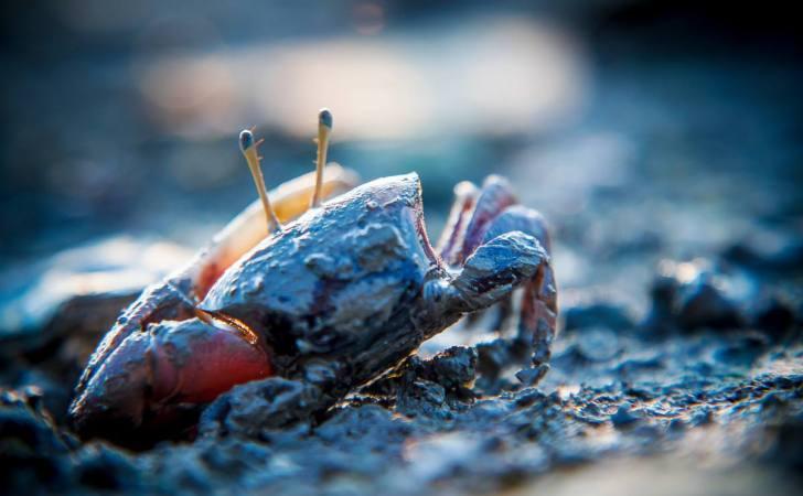 三种螃蟹思维